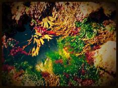 Seaweed Baths