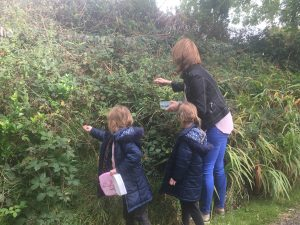 Picking Blackberries @ Castlewood Dingle