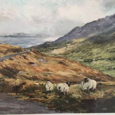 Cooley Mountain Sheep Irene Woods